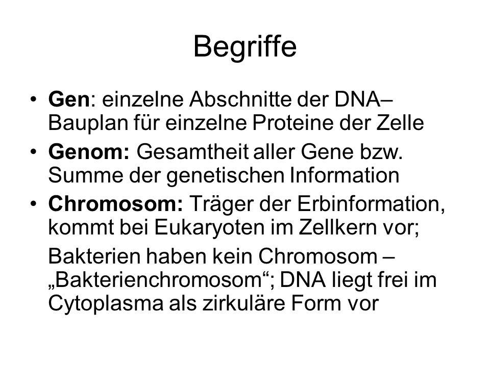 Begriffe Gen: einzelne Abschnitte der DNA– Bauplan für einzelne Proteine der Zelle Genom: Gesamtheit aller Gene bzw. Summe der genetischen Information