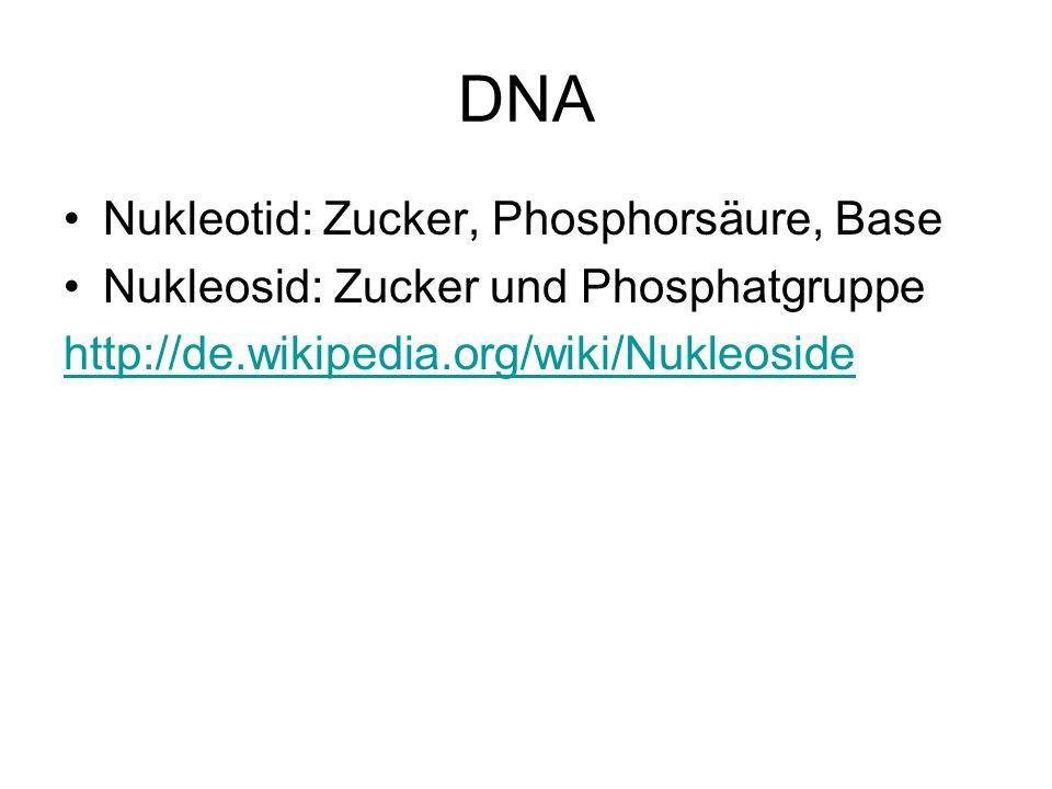 DNA Nukleotid: Zucker, Phosphorsäure, Base Nukleosid: Zucker und Phosphatgruppe http://de.wikipedia.org/wiki/Nukleoside