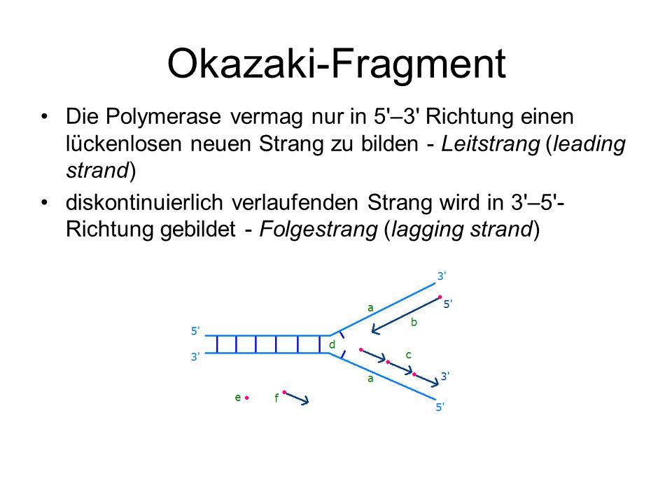 Okazaki-Fragment Die Polymerase vermag nur in 5'–3' Richtung einen lückenlosen neuen Strang zu bilden - Leitstrang (leading strand) diskontinuierlich