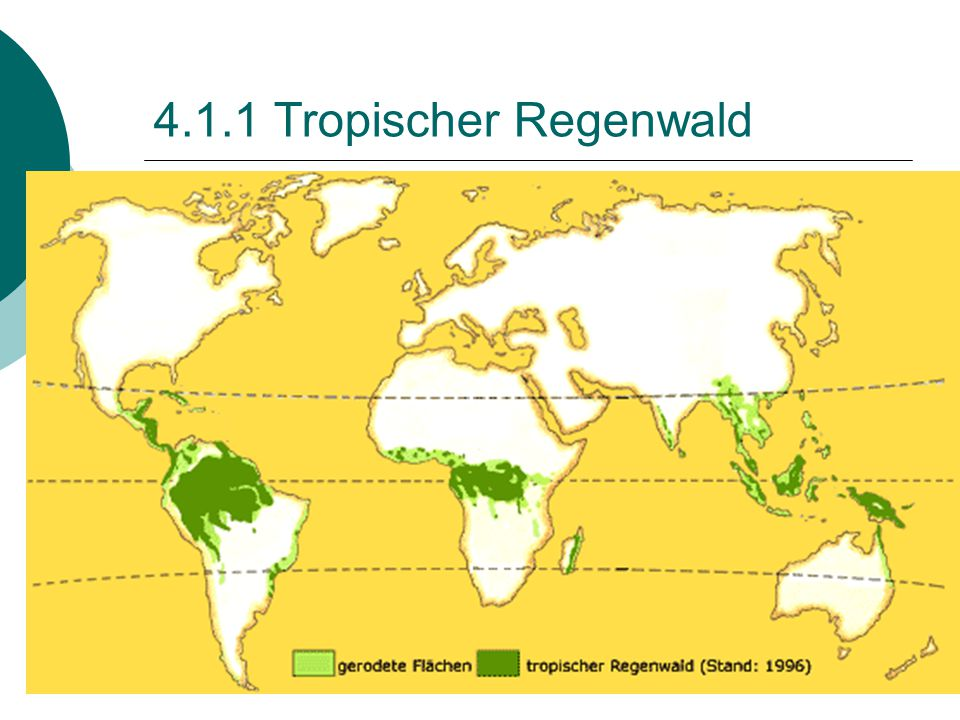 4.1.1 Tropischer Regenwald
