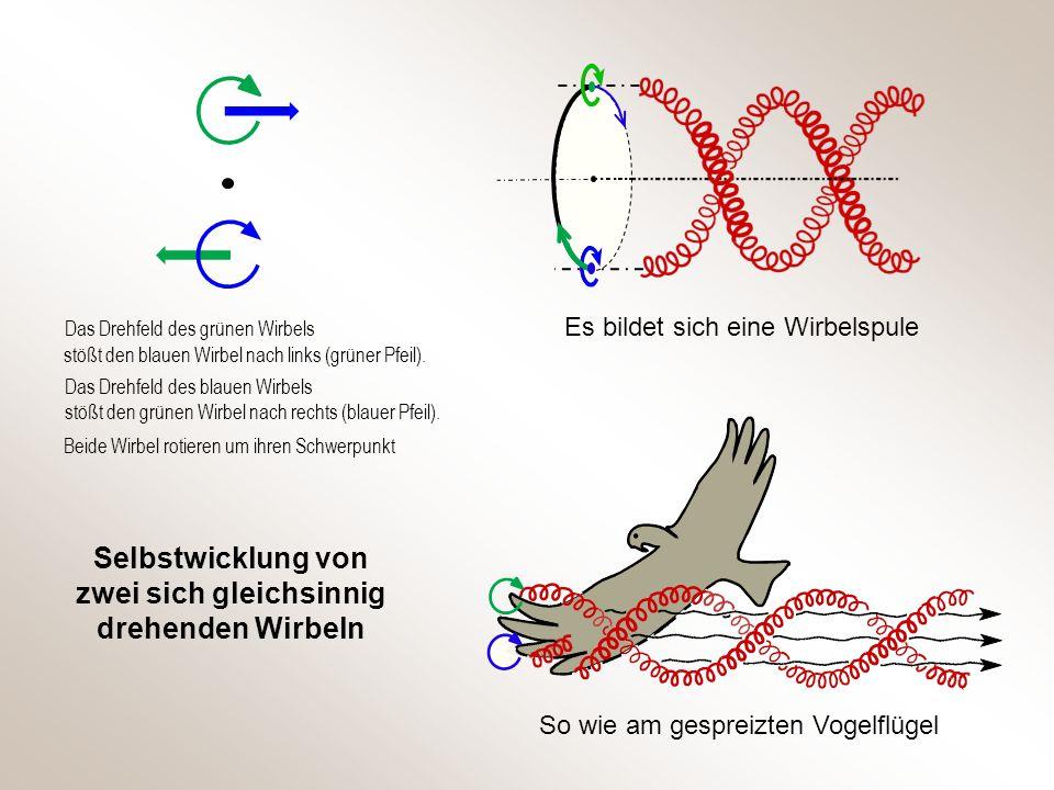 Selbstwicklung von zwei sich gleichsinnig drehenden Wirbeln So wie am gespreizten Vogelflügel Es bildet sich eine Wirbelspule Das Drehfeld des grünen