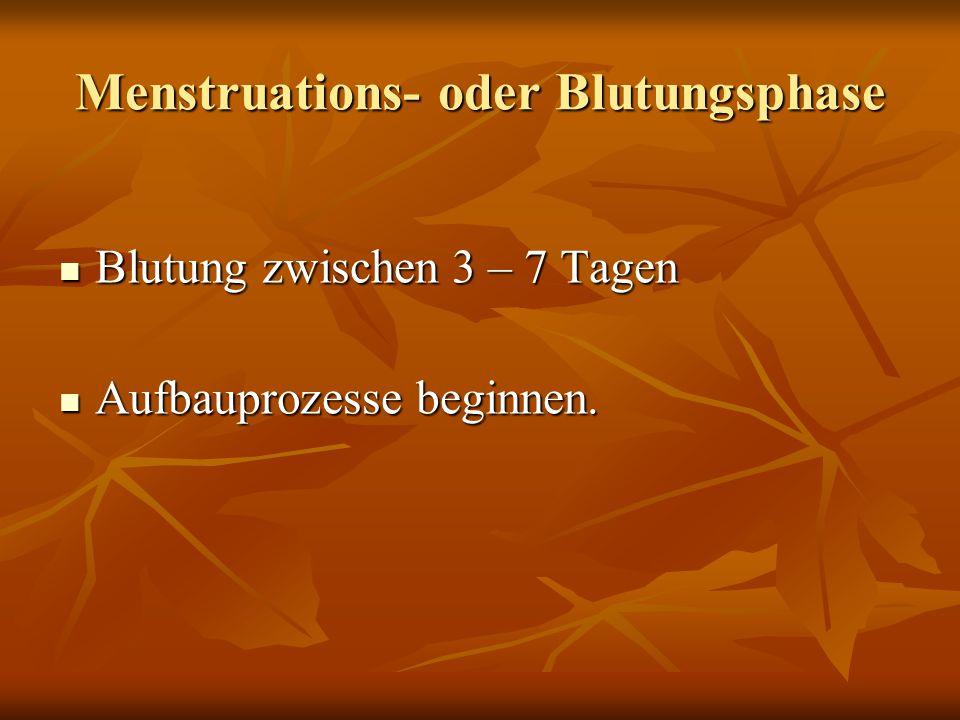 Menstruations- oder Blutungsphase Blutung zwischen 3 – 7 Tagen Blutung zwischen 3 – 7 Tagen Aufbauprozesse beginnen. Aufbauprozesse beginnen.
