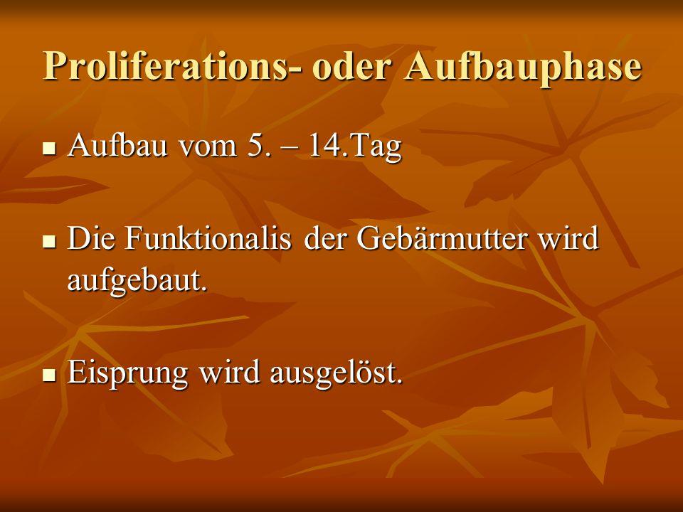 Proliferations- oder Aufbauphase Aufbau vom 5. – 14.Tag Aufbau vom 5. – 14.Tag Die Funktionalis der Gebärmutter wird aufgebaut. Die Funktionalis der G