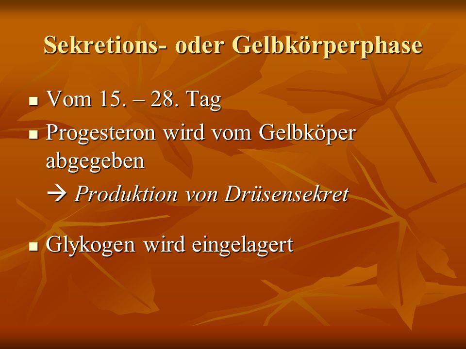 Sekretions- oder Gelbkörperphase Vom 15. – 28. Tag Vom 15. – 28. Tag Progesteron wird vom Gelbköper abgegeben Progesteron wird vom Gelbköper abgegeben