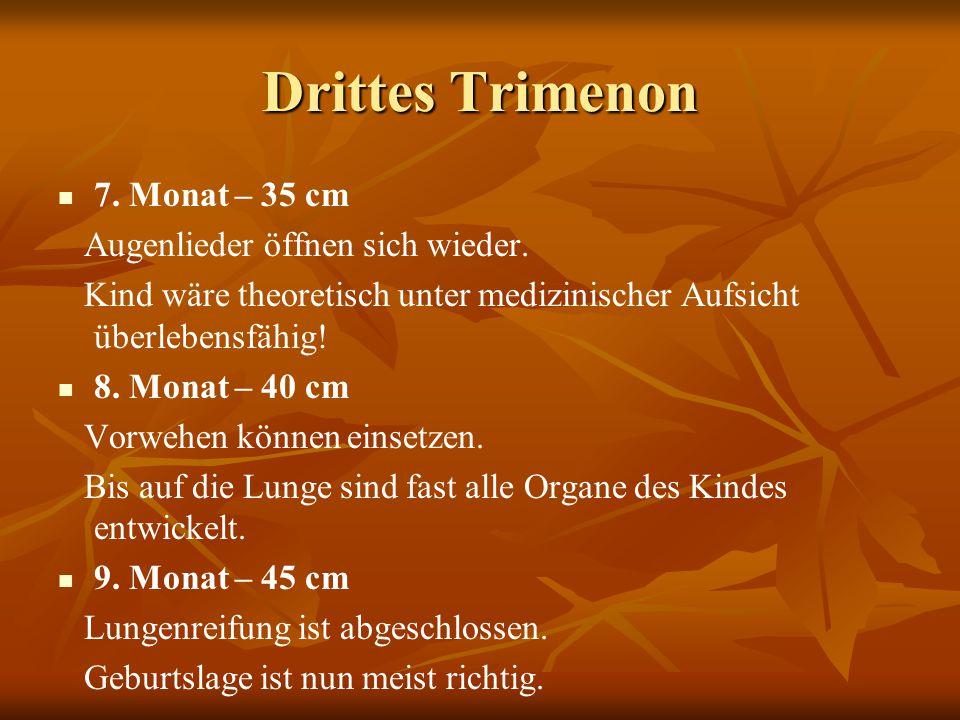 Drittes Trimenon 7. Monat – 35 cm Augenlieder öffnen sich wieder. Kind wäre theoretisch unter medizinischer Aufsicht überlebensfähig! 8. Monat – 40 cm