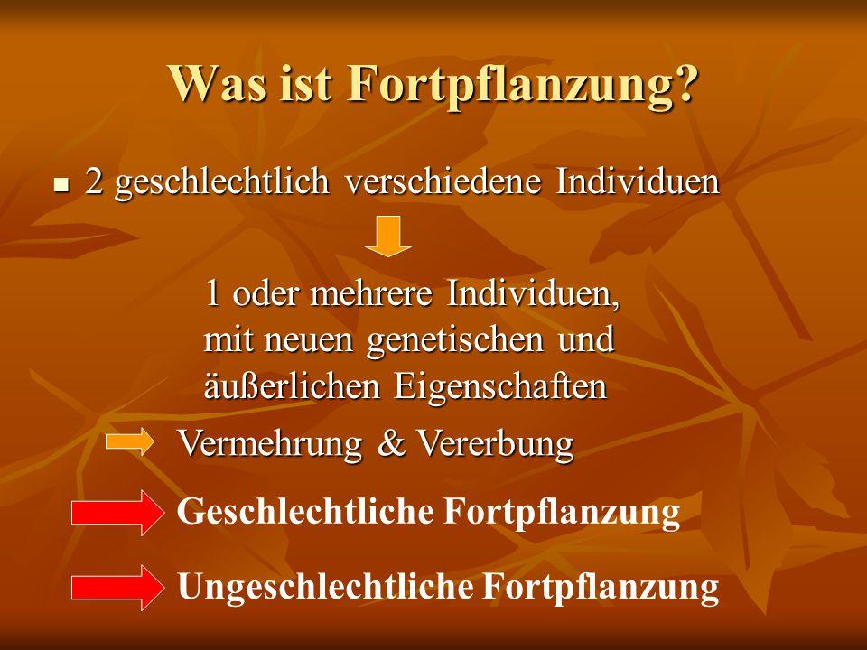 Was ist Fortpflanzung? 2 geschlechtlich verschiedene Individuen 2 geschlechtlich verschiedene Individuen Vermehrung & Vererbung 1 oder mehrere Individ
