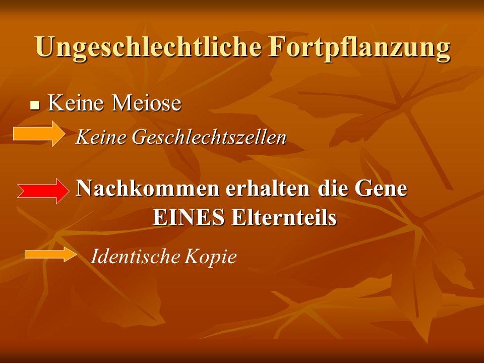 Ungeschlechtliche Fortpflanzung Keine Meiose Keine Meiose Keine Geschlechtszellen Nachkommen erhalten die Gene EINES Elternteils Identische Kopie