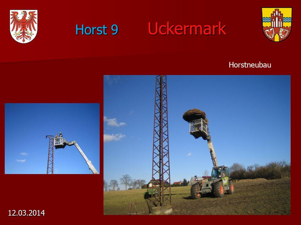 Horst 9 Uckermark 12.03.2014 Horstneubau