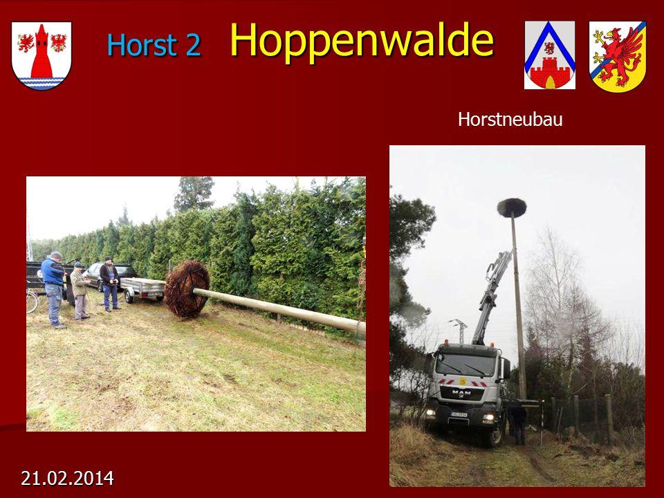 Horst 2 Hoppenwalde 21.02.2014 Horstneubau