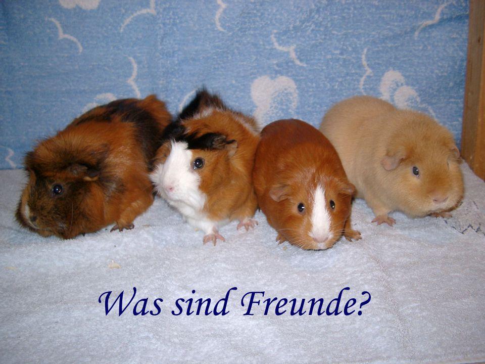Was sind Freunde?