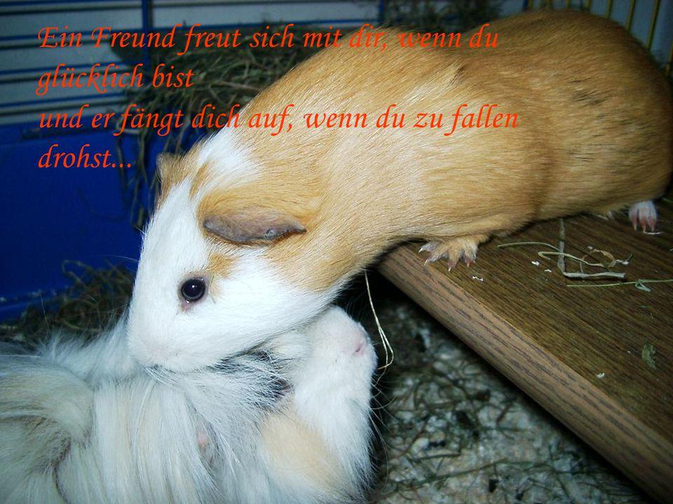 Ein Freund freut sich mit dir, wenn du glücklich bist und er fängt dich auf, wenn du zu fallen drohst...