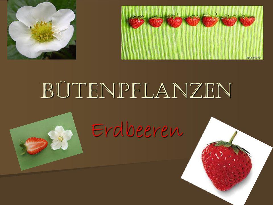 die entstehung der erdbeere die entstehung der erdbeere 1° Zuerst gibt es eine Blüte 1° Zuerst gibt es eine Blüte ° ERDBEERE WIRD AUF LATEINICH fragi genant.