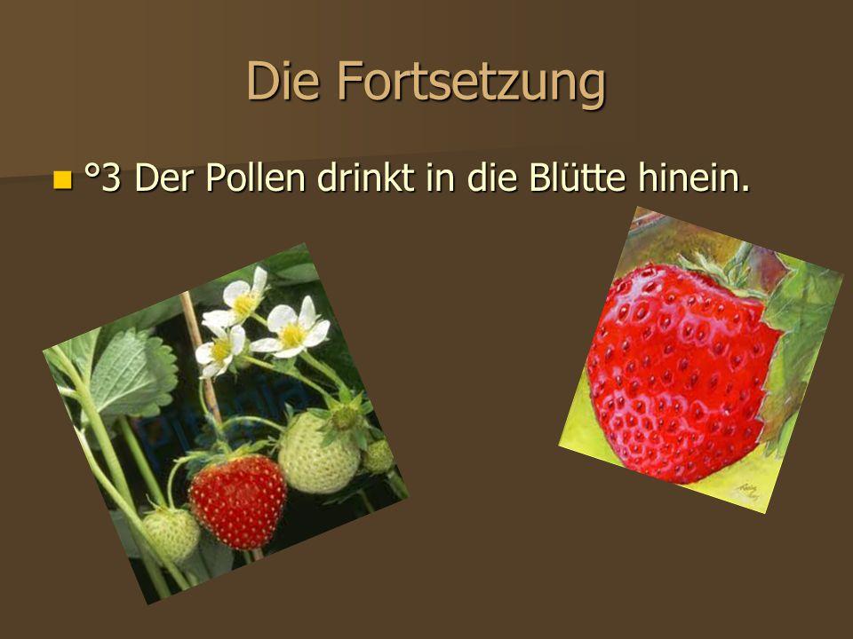 Die Fortsetzung °3 Der Pollen drinkt in die Blütte hinein. °3 Der Pollen drinkt in die Blütte hinein.