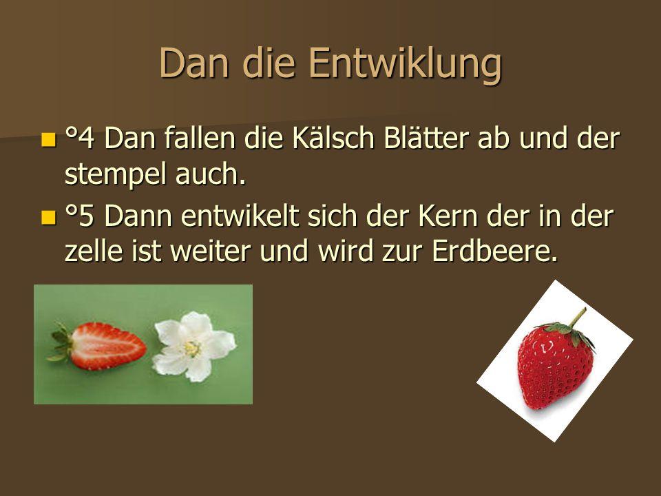 Was man daraus machen kann °6 Wenn die Erdbeere reif ist kan man daraus fiele sachen machen wie zumbeispiel Marmelade,Kuchen,Jogurt… °6 Wenn die Erdbeere reif ist kan man daraus fiele sachen machen wie zumbeispiel Marmelade,Kuchen,Jogurt…