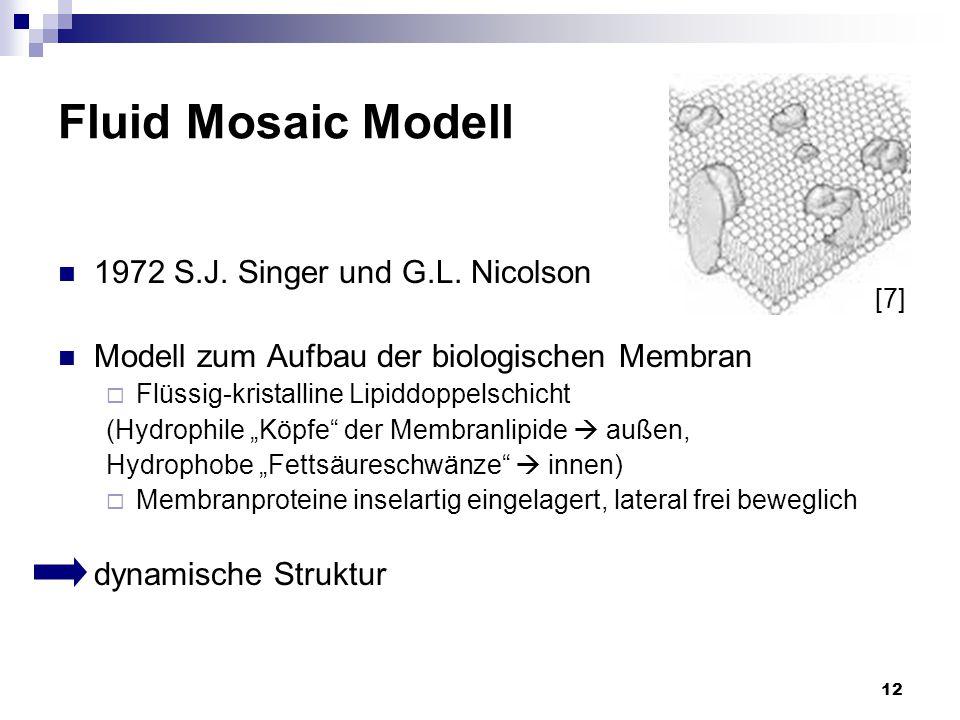 12 Fluid Mosaic Modell 1972 S.J. Singer und G.L. Nicolson Modell zum Aufbau der biologischen Membran  Flüssig-kristalline Lipiddoppelschicht (Hydroph