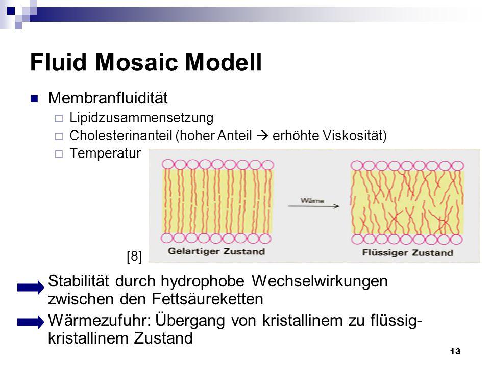 13 Fluid Mosaic Modell Membranfluidität  Lipidzusammensetzung  Cholesterinanteil (hoher Anteil  erhöhte Viskosität)  Temperatur Stabilität durch h