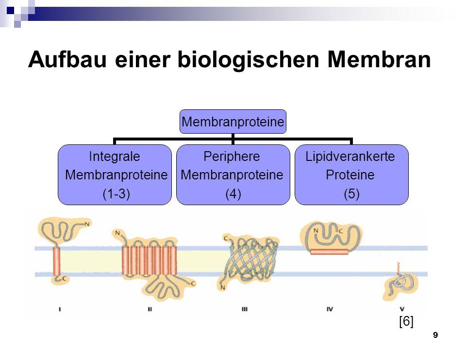 9 Aufbau einer biologischen Membran Membranproteine Integrale Membranproteine (1-3) Periphere Membranproteine (4) Lipidverankerte Proteine (5) [6]