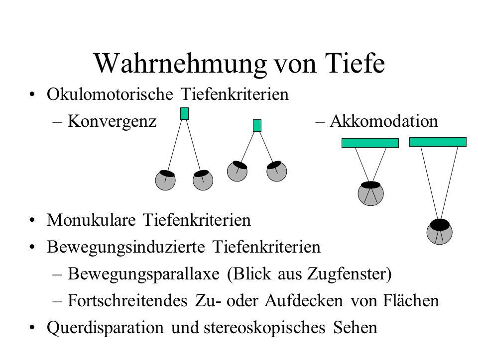 Wahrnehmung von Tiefe Okulomotorische Tiefenkriterien –Konvergenz– Akkomodation Monukulare Tiefenkriterien Bewegungsinduzierte Tiefenkriterien –Bewegungsparallaxe (Blick aus Zugfenster) –Fortschreitendes Zu- oder Aufdecken von Flächen Querdisparation und stereoskopisches Sehen