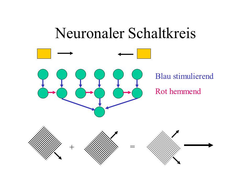 Neuronaler Schaltkreis Blau stimulierend Rot hemmend + =