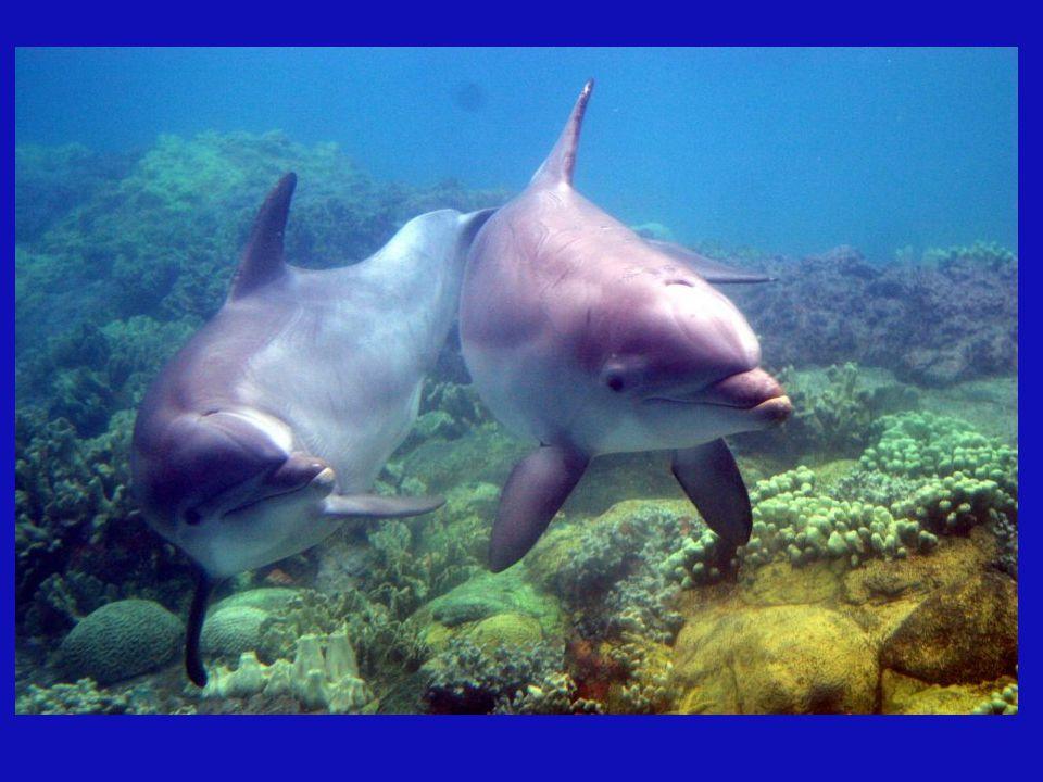 Ein Delphin in der Gebärmutter seiner Mutter