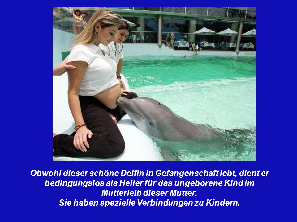 So paaren sich die Delphine.