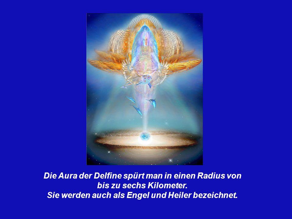 Die Aura der Delfine spürt man in einen Radius von bis zu sechs Kilometer.