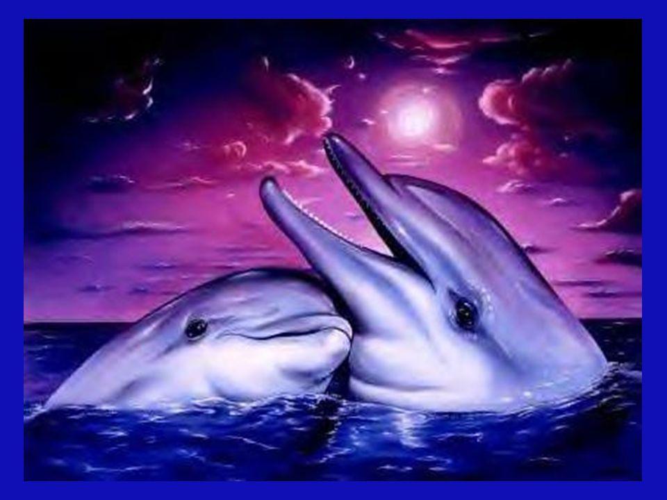 Die Aura der Delfine spürt man in einen Radius von bis zu sechs Kilometer. Sie werden auch als Engel und Heiler bezeichnet.