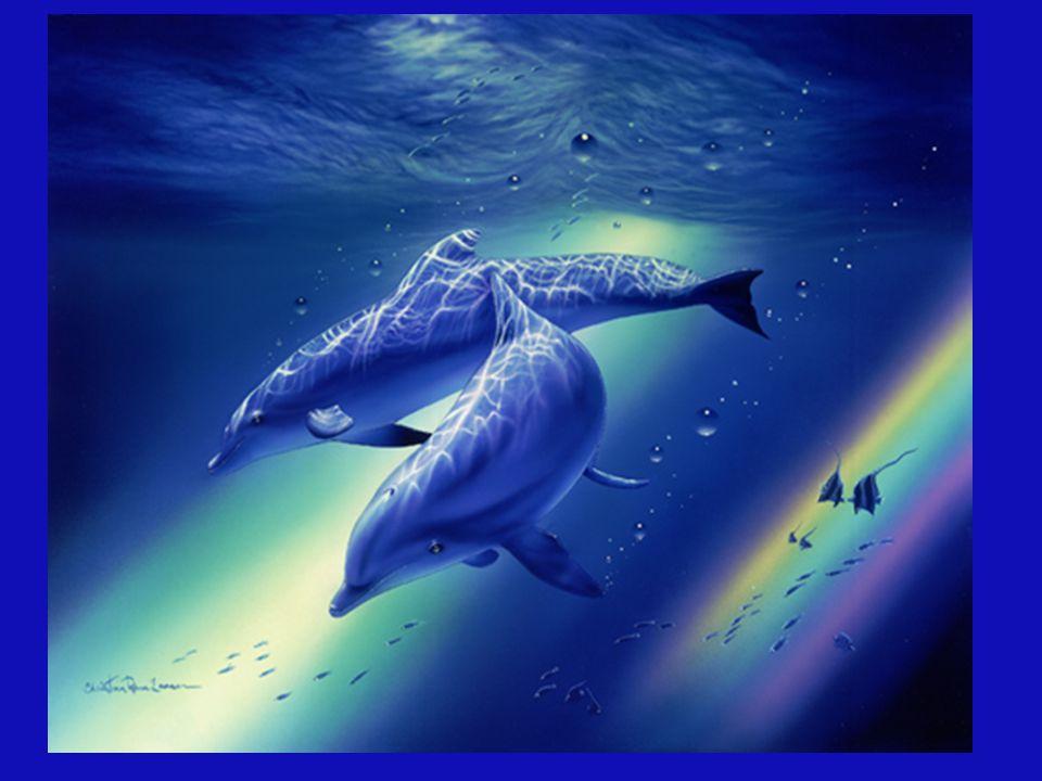 Obwohl dieser schöne Delfin in Gefangenschaft lebt, dient er bedingungslos als Heiler für das ungeborene Kind im Mutterleib dieser Mutter.