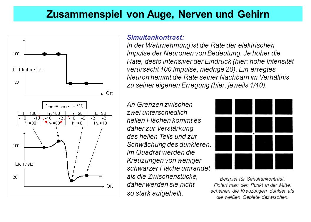 Zusammenspiel von Auge, Nerven und Gehirn Simultankontrast: In der Wahrnehmung ist die Rate der elektrischen Impulse der Neuronen von Bedeutung.
