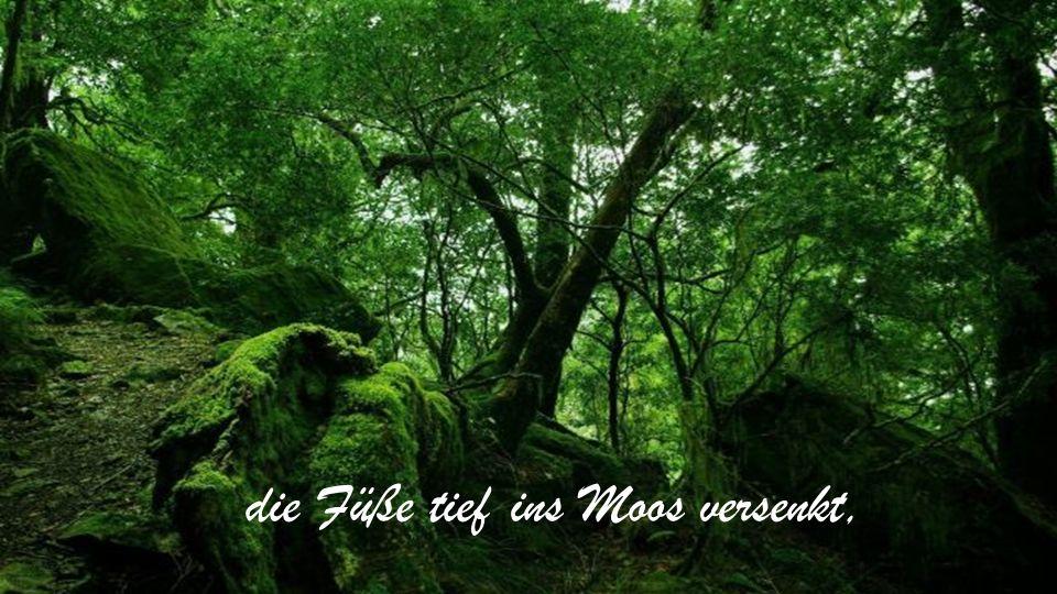 Musik Herb Ernst Into the Sacred