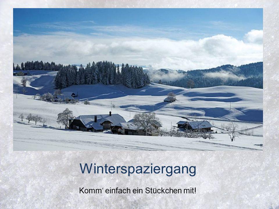 Winterspaziergang Komm' einfach ein Stückchen mit!