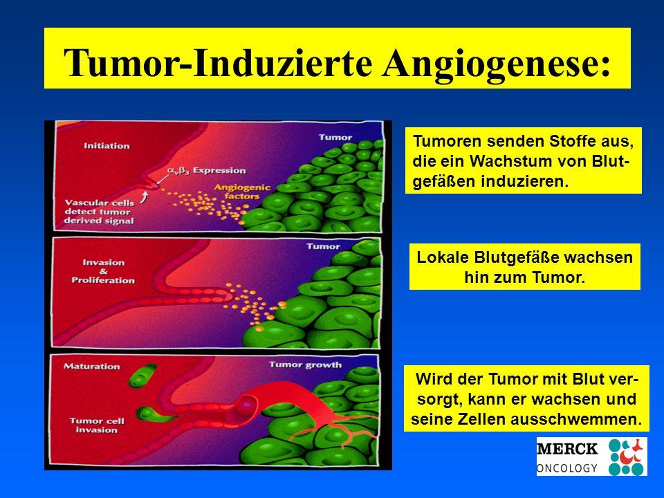 03.05.2001 17.00 Uhr s.t. Potsdam: 16.06.2001 GEHE Tumor-Induzierte Angiogenese: Tumoren senden Stoffe aus, die ein Wachstum von Blut- gefäßen induzie