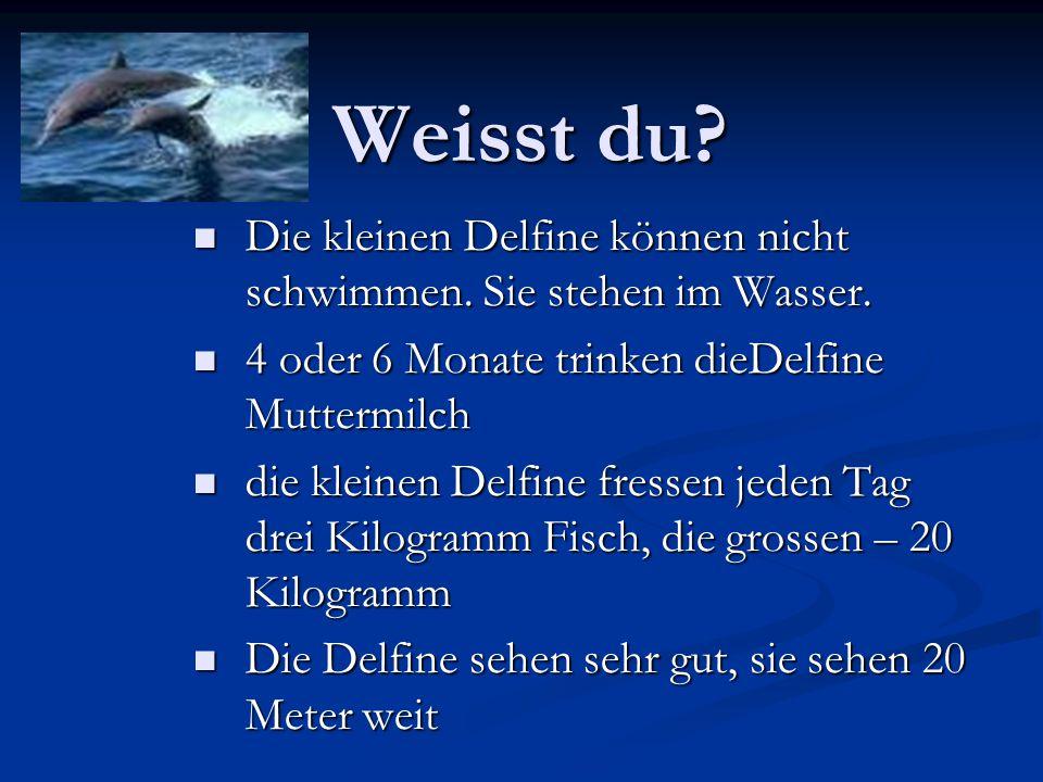 Weisst du? Die kleinen Delfine können nicht schwimmen. Sie stehen im Wasser. Die kleinen Delfine können nicht schwimmen. Sie stehen im Wasser. 4 oder