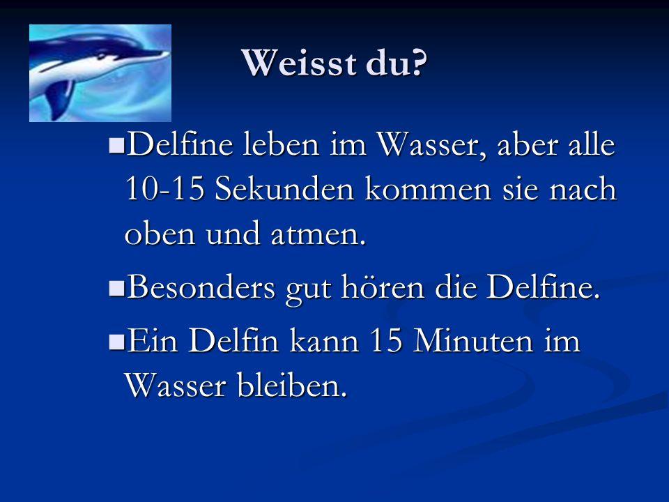Weisst du? Delfine leben im Wasser, aber alle 10-15 Sekunden kommen sie nach oben und atmen. Delfine leben im Wasser, aber alle 10-15 Sekunden kommen