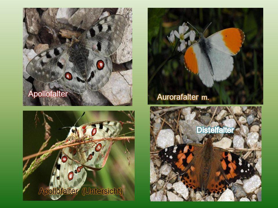 Eine kleine Auswahl dieser schönen Geschöpfe