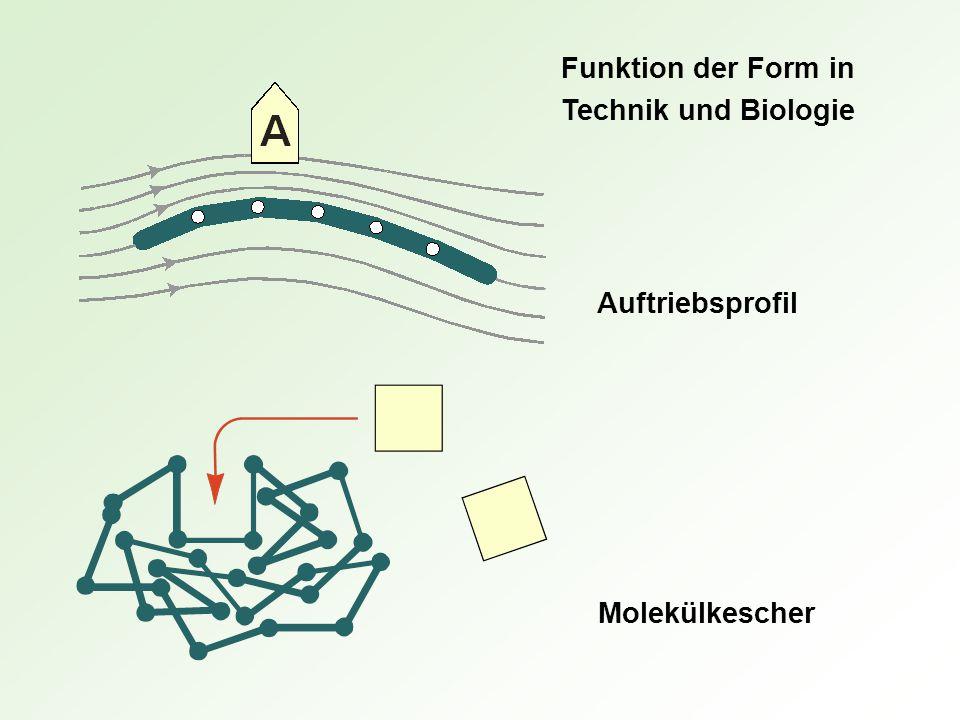 Funktion der Form in Technik und Biologie Auftriebsprofil Molekülkescher