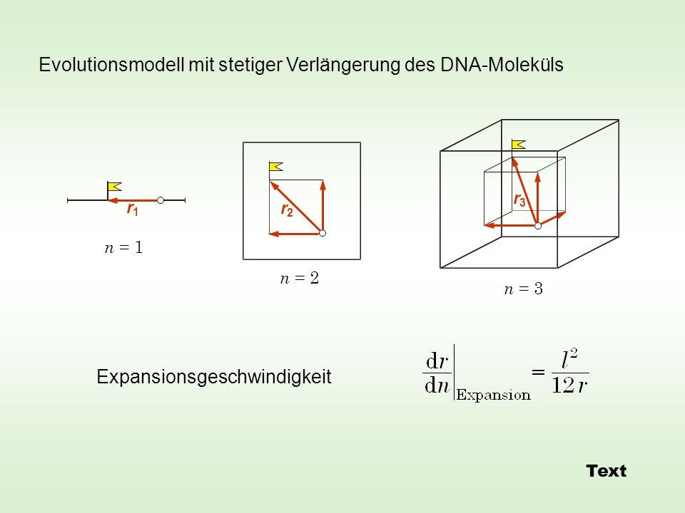 Evolutionsmodell mit stetiger Verlängerung des DNA-Moleküls Expansionsgeschwindigkeit r2r2 r1r1 r3r3 n = 1 n = 3 n = 2 Text