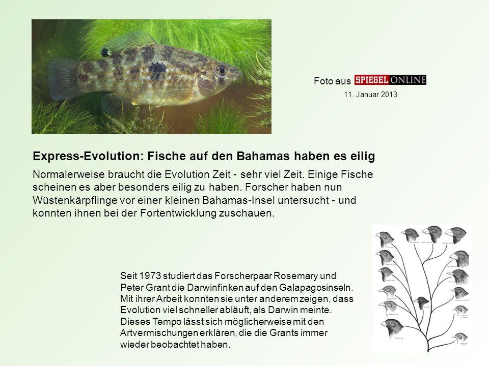 Express-Evolution: Fische auf den Bahamas haben es eilig Normalerweise braucht die Evolution Zeit - sehr viel Zeit.