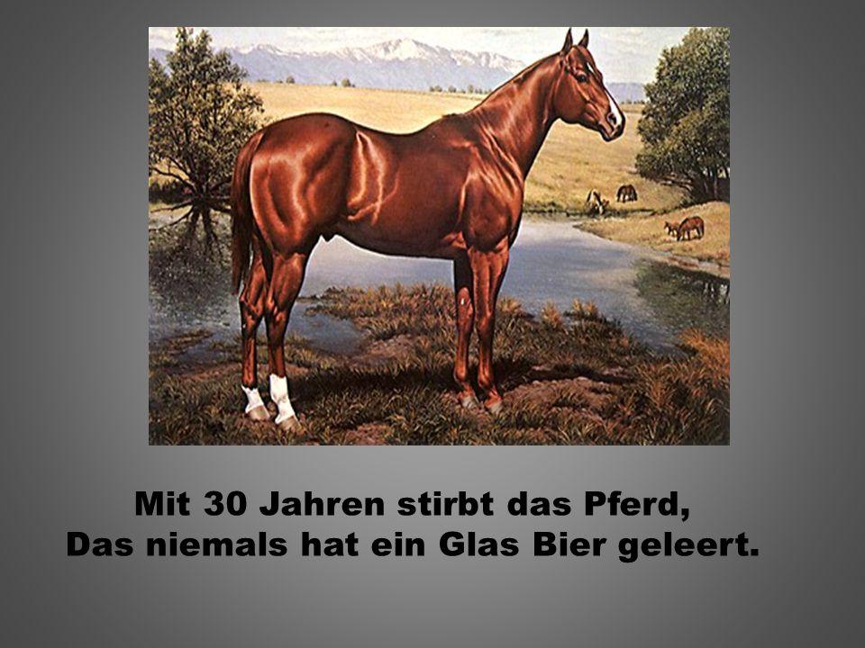 Mit 30 Jahren stirbt das Pferd, Das niemals hat ein Glas Bier geleert.