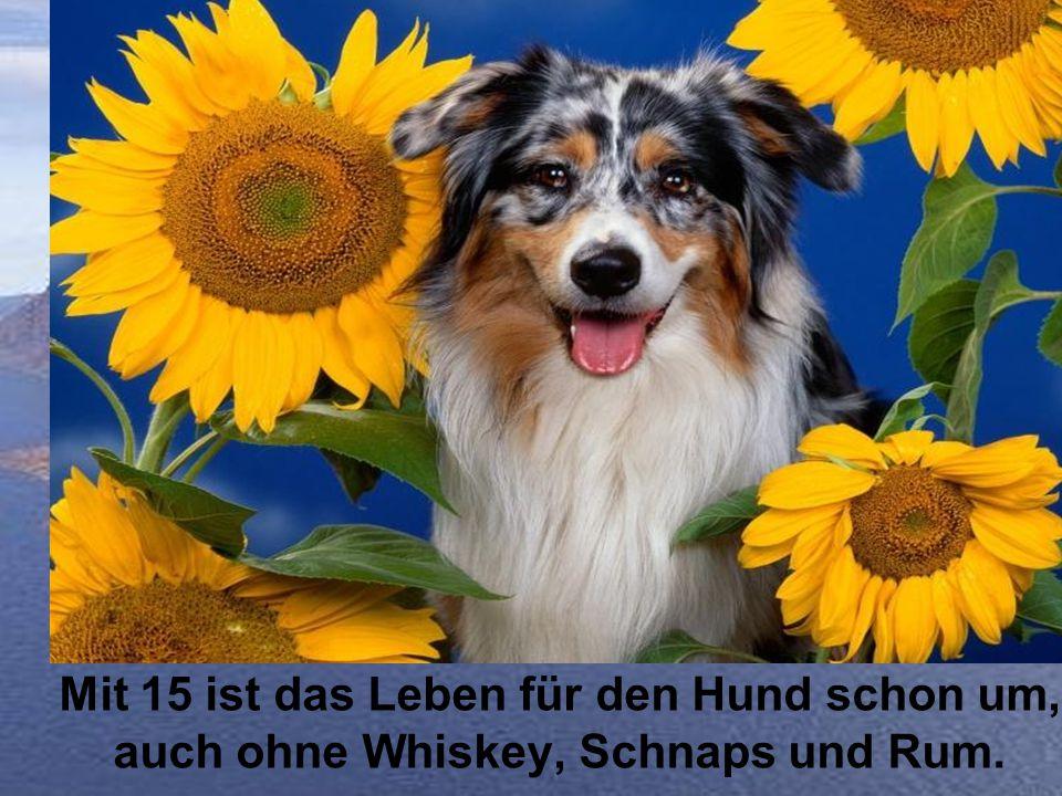 Mit 15 ist das Leben für den Hund schon um, auch ohne Whiskey, Schnaps und Rum.
