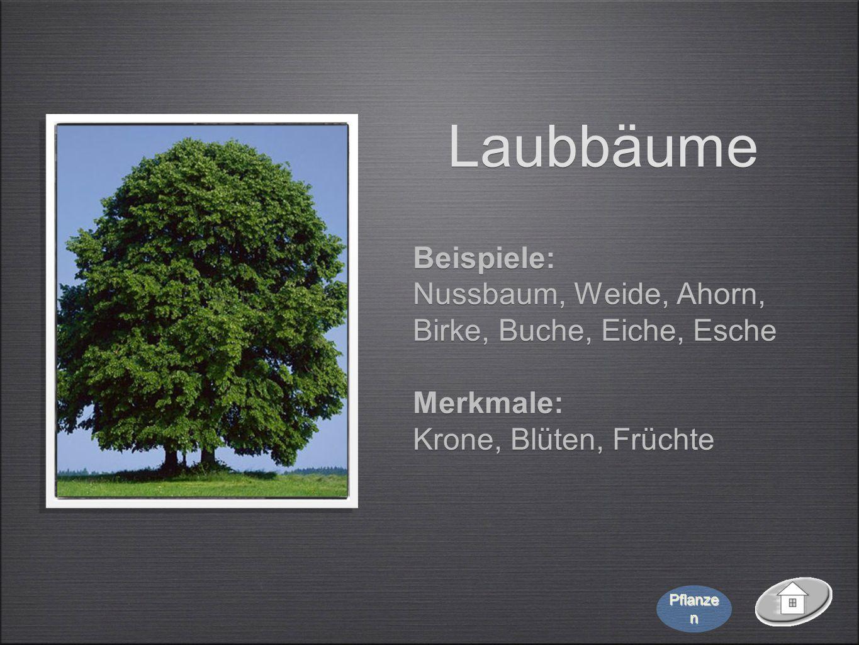 Laubbäume Beispiele: Nussbaum, Weide, Ahorn, Birke, Buche, Eiche, Esche Merkmale: Krone, Blüten, Früchte Beispiele: Nussbaum, Weide, Ahorn, Birke, Buc