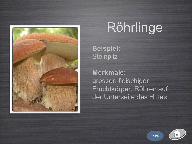 Röhrlinge Beispiel: Steinpilz Merkmale: grosser, fleischiger Fruchtkörper, Röhren auf der Unterseite des Hutes Beispiel: Steinpilz Merkmale: grosser,