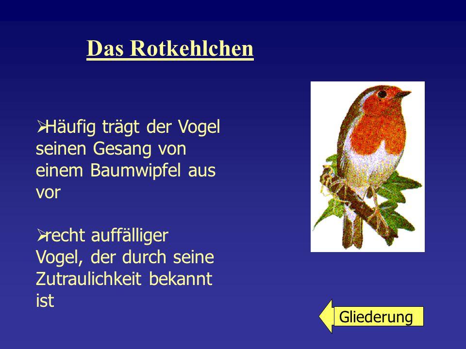 Der Buntspecht  Ist ein Nichtsingvögel  Als typischer Specht bewohnt er die Bäume in Wäldern, Gehölzen, Parks und Gärten  Seine Nahrung besteht aus Insekten, Samen von Nadelbäumen sowie Eiern und jungen Vögeln Gliederung