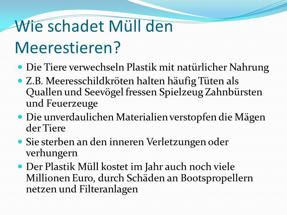 Open PR Das offene PR-Portal Der Mellumrat e.V. Tiere in Not ! 1