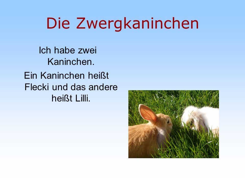 Die Zwergkaninchen Ich habe zwei Kaninchen. Ein Kaninchen heißt Flecki und das andere heißt Lilli.