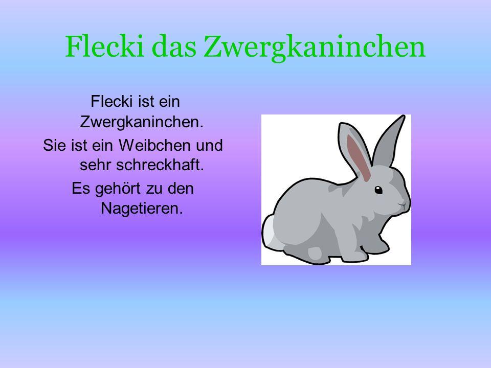 Flecki das Zwergkaninchen Flecki ist ein Zwergkaninchen. Sie ist ein Weibchen und sehr schreckhaft. Es gehört zu den Nagetieren.