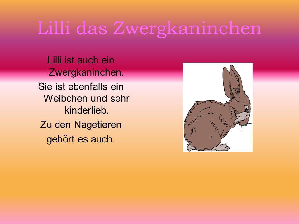 Lilli das Zwergkaninchen Lilli ist auch ein Zwergkaninchen. Sie ist ebenfalls ein Weibchen und sehr kinderlieb. Zu den Nagetieren gehört es auch.