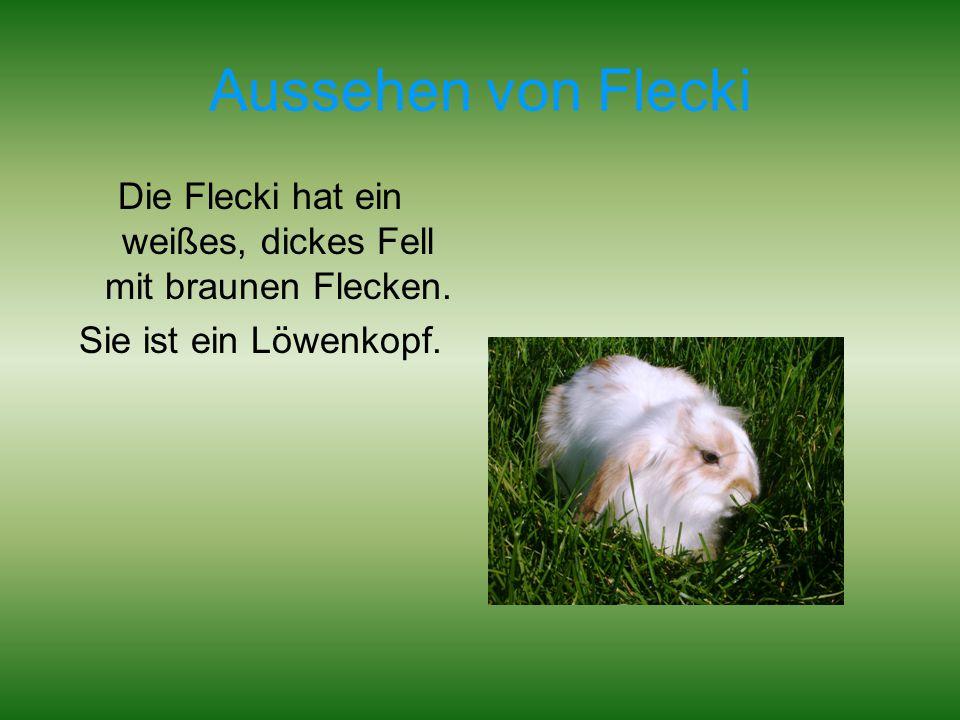 Aussehen von Flecki Die Flecki hat ein weißes, dickes Fell mit braunen Flecken. Sie ist ein Löwenkopf.