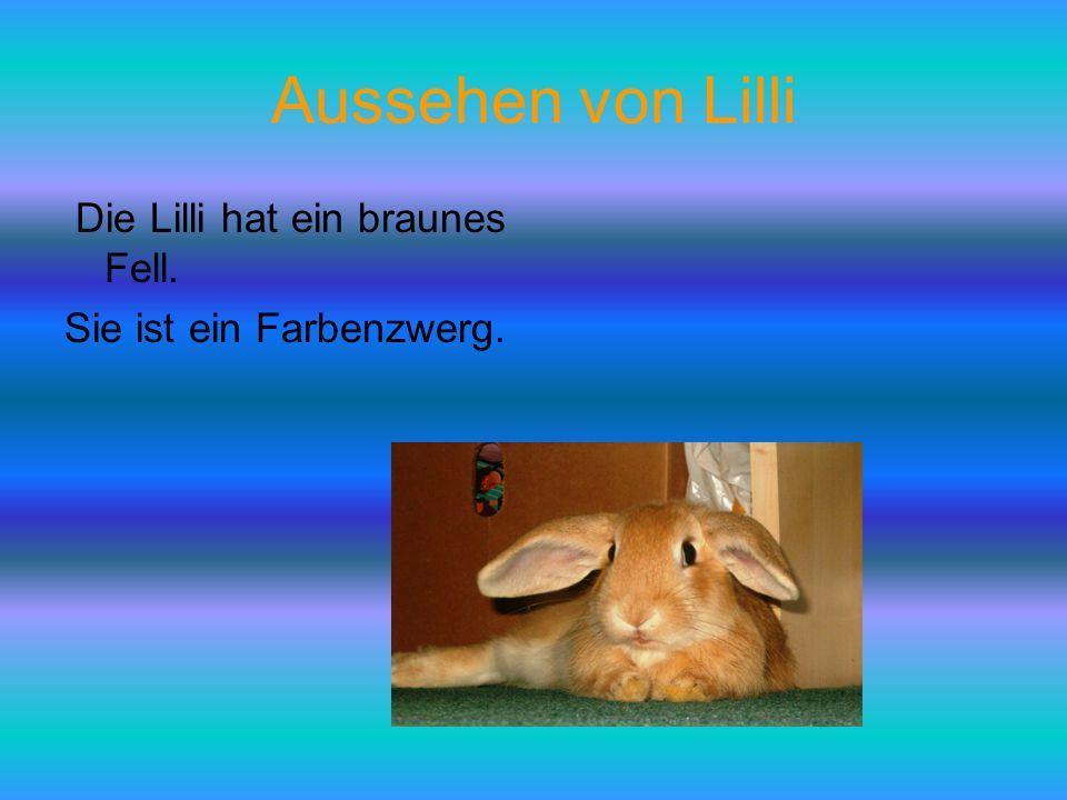 Aussehen von Lilli Die Lilli hat ein braunes Fell. Sie ist ein Farbenzwerg.