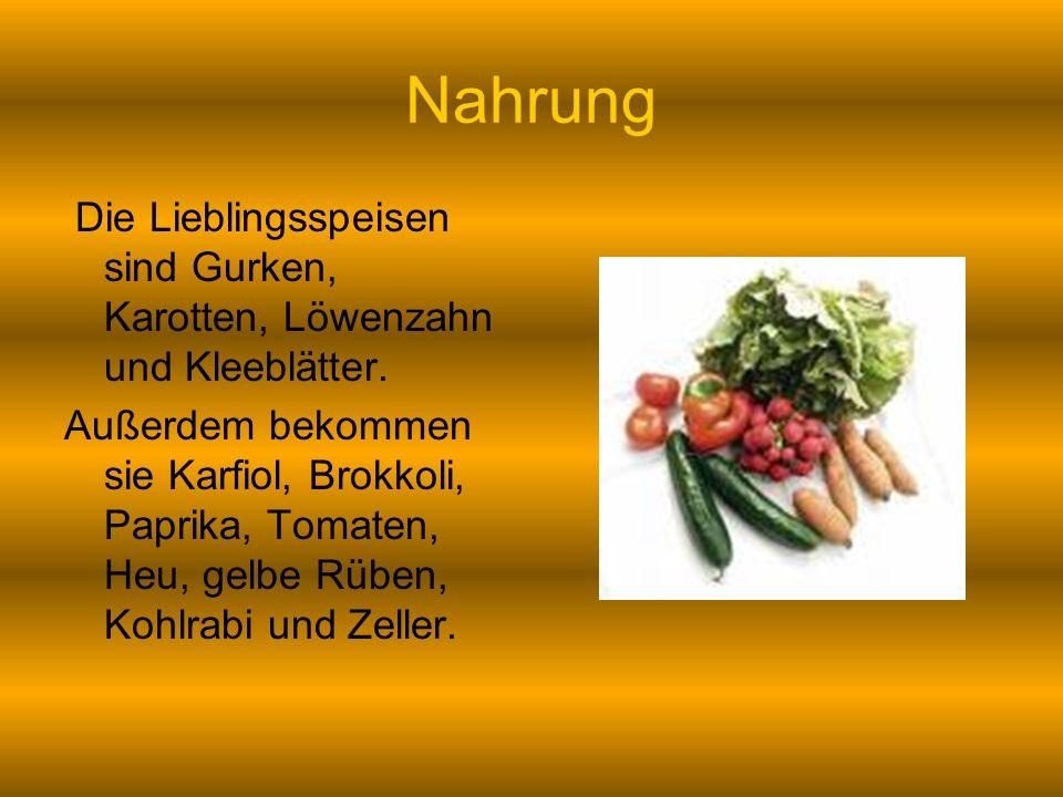 Nahrung Die Lieblingsspeisen sind Gurken, Karotten, Löwenzahn und Kleeblätter. Außerdem bekommen sie Karfiol, Brokkoli, Paprika, Tomaten, Heu, gelbe R